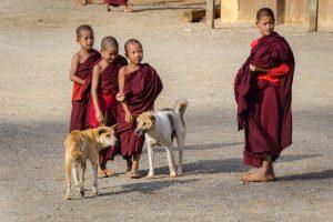 Buddhist, Buddhism, boys, Myanmar, Burma